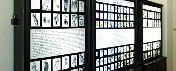 Пражский стоматологический музей
