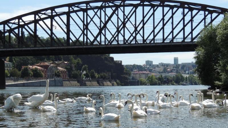 Вышеградский железнодорожный мост