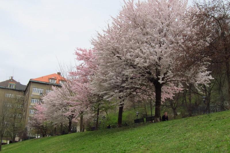 Петршинские сады