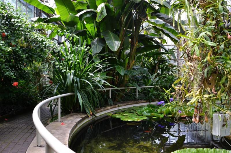 Ботанический сад 8