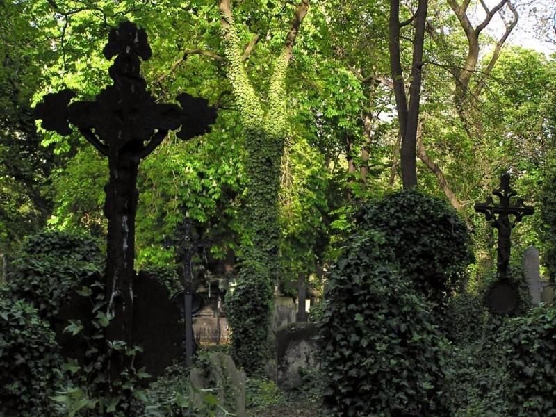 Ольшанское кладбище 7