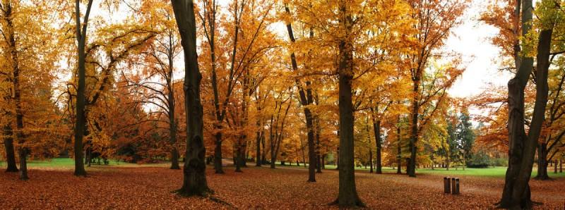 Парк Стромовка 9