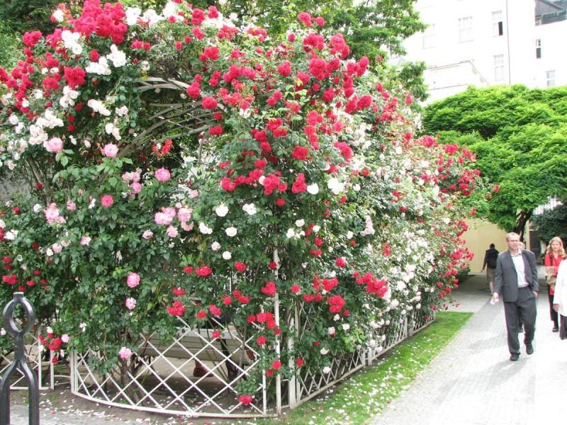Франтишканский сад 5