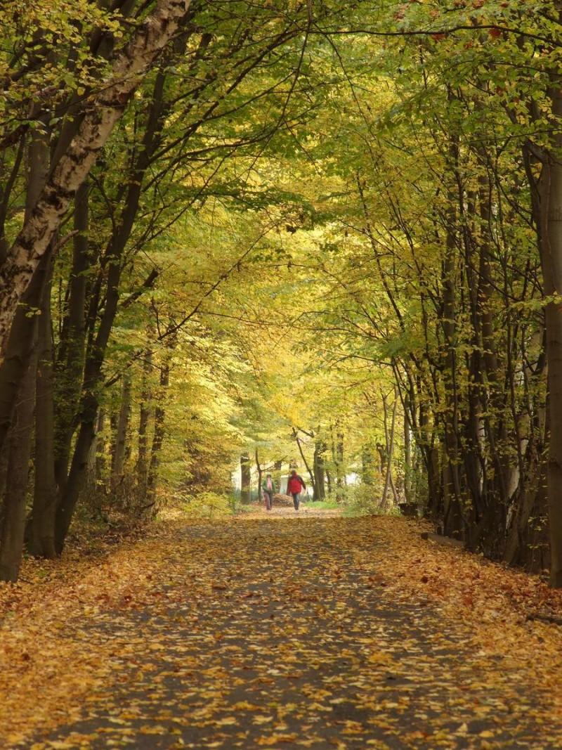 Кунратицкий лес 13