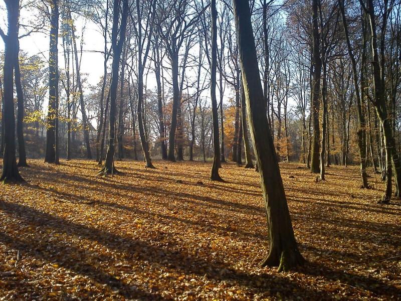 Кунратицкий лес 5