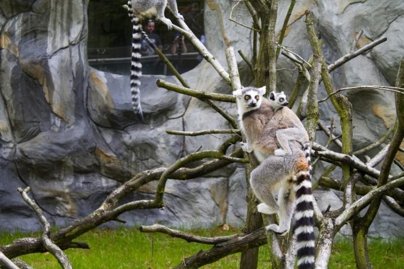 Зоопарк Оломоуц 7