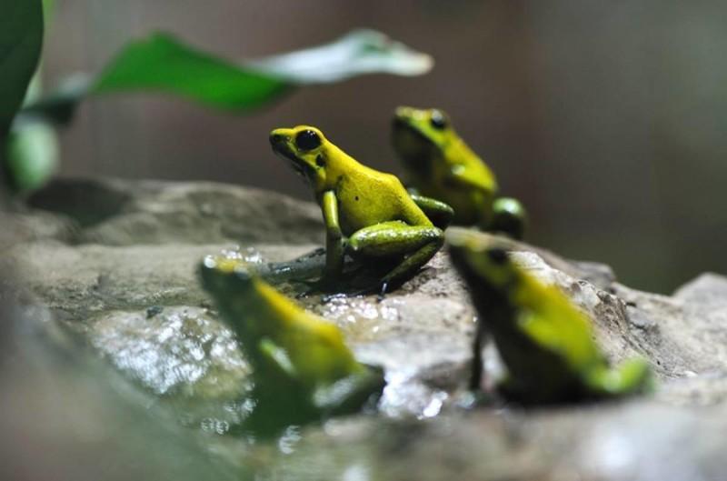 Зоопарк Пльзень 6