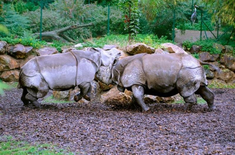 Зоопарк Пльзень 8