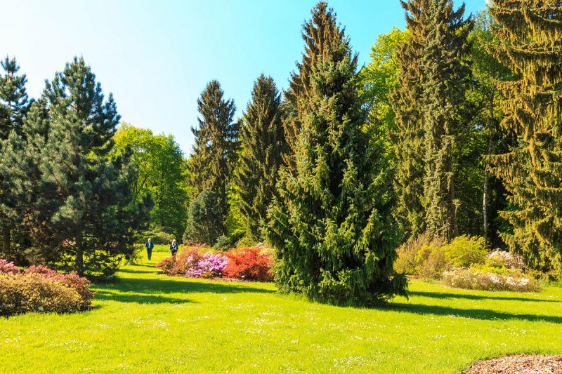 Пругоницкий парк 10